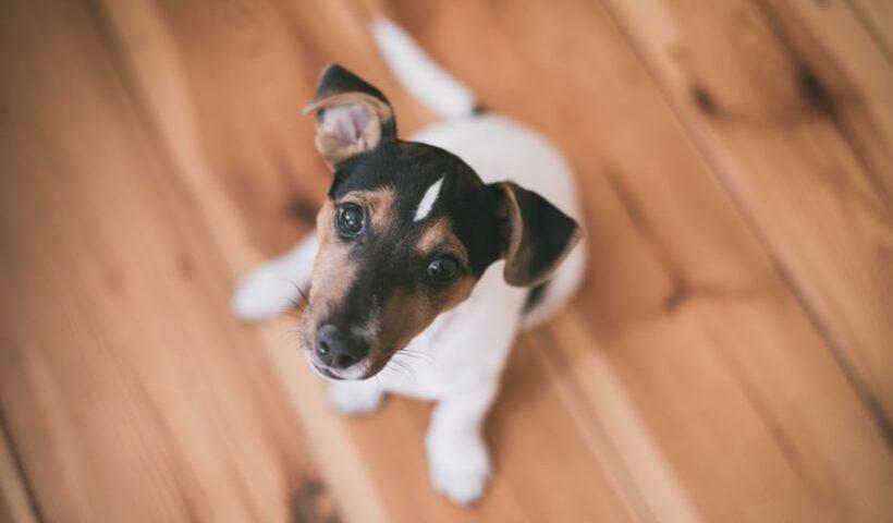 De juiste vloer kiezen voor je hond