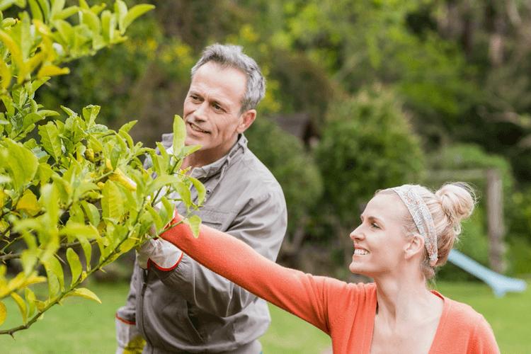 Boom voor in je tuin